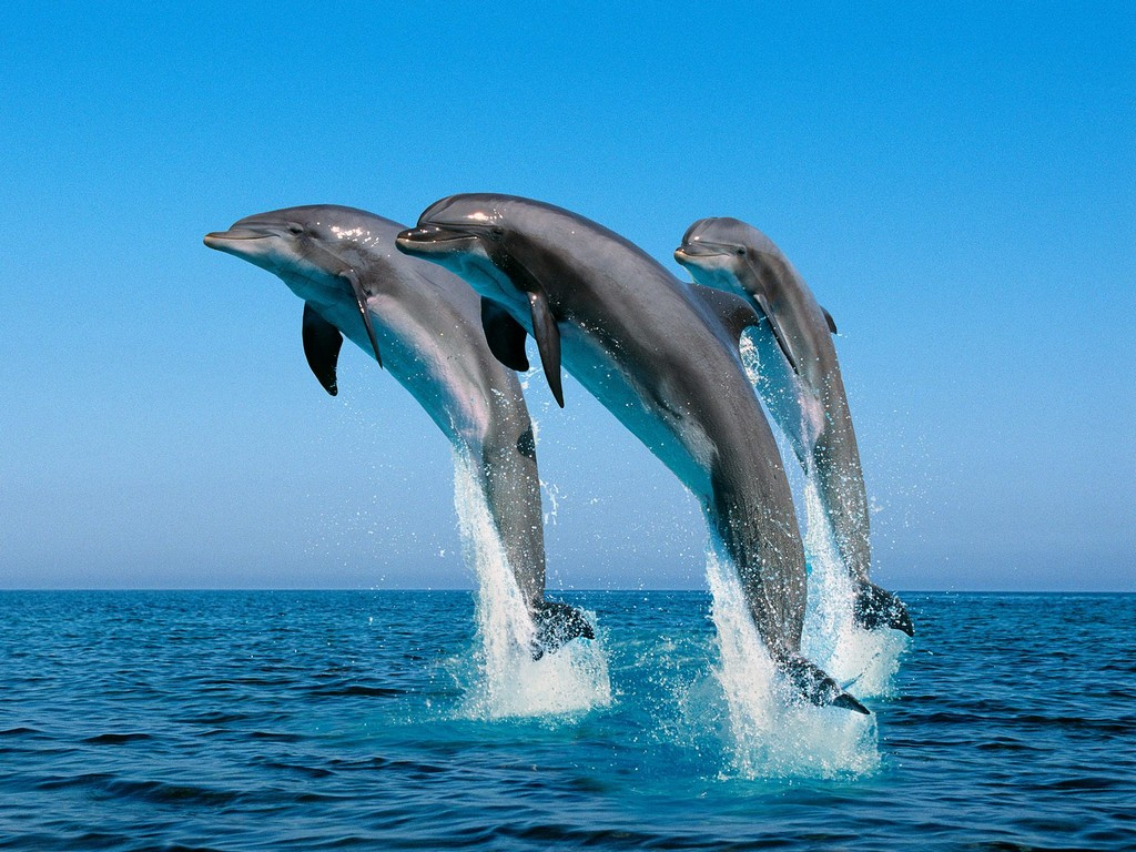 Cute Animal Dolphins