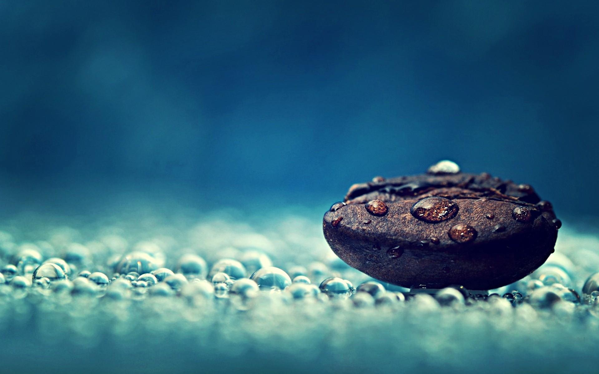 Coffee Photography Water Drops Macro Seeds Dew HD Wallpaper