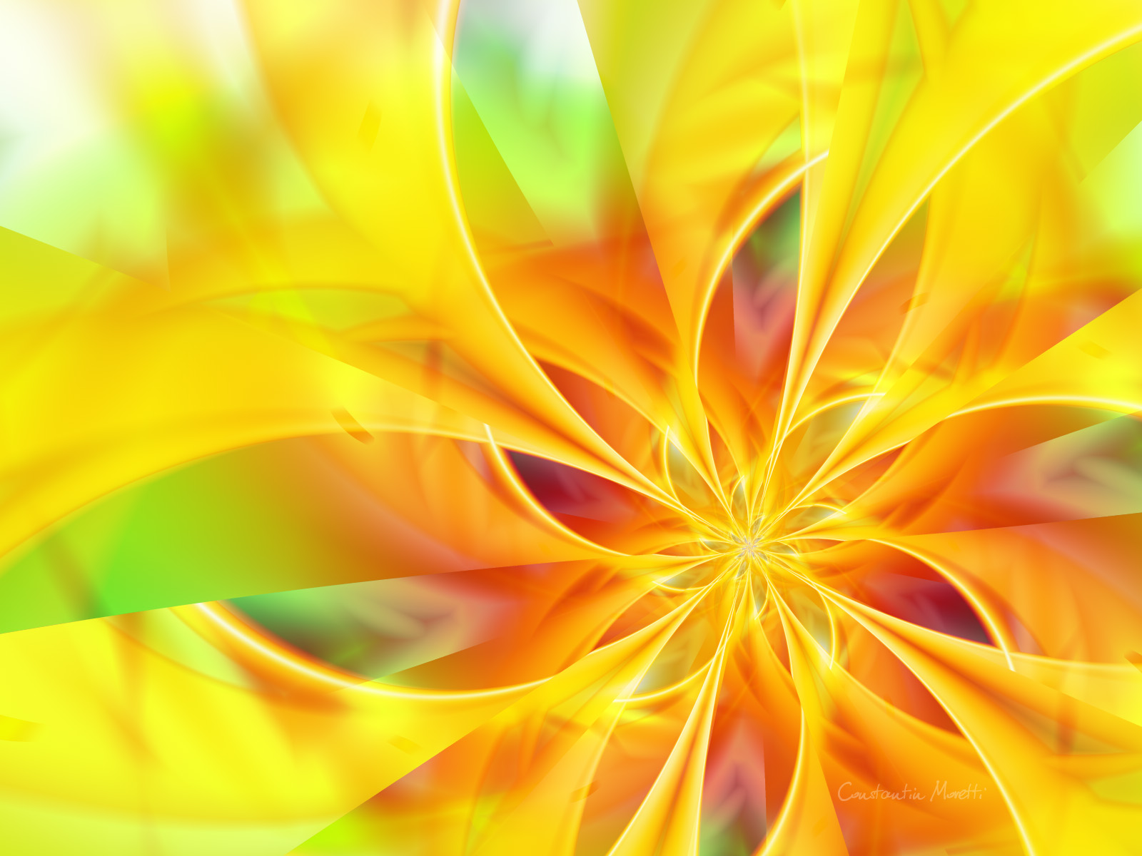 Beautiful Colorful Flower And Yellow HD Wallpaper Picture Image