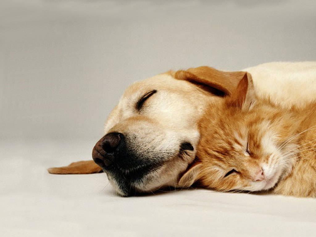 Sleeping Cat with Sleeping Dog
